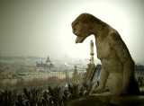 Notre Dame - Gargoyle