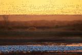Sunrise Mass Ascend.jpg