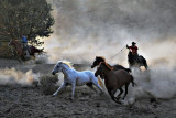 Horse Chase in Dust.jpg