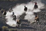 Horsedrive in Dust.jpg