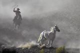 Elusive White Horse.jpg