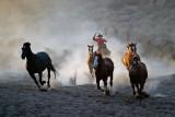 Horse Roundup_1325.jpg