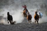 Horse Roundup_1349.jpg