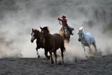 Horse Roundup_1353.jpg