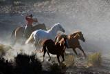 Horse Roundup_1465.jpg