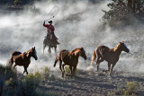 Horse Roundup_1523.jpg