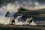 Horsedrive at Rockspring Ranch