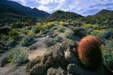 High Desert Spring - Anza Borrego.jpg