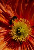 The Pollinator.jpg