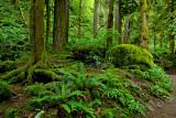 Rain Forest - Oneonta Trail.jpg