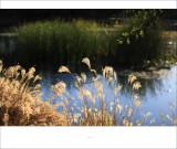 small lake @ irvine