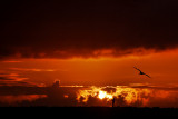 Sunset @ Corona Del Mar Beach
