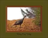 Rainy Day Turkey