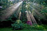 Morning Sunbeams