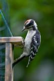 Woodpecker question #4