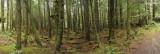 Oregon Coast Forest