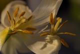 Orgie botanique