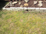 rocks with garden.JPG