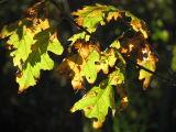 October Reflection.jpg