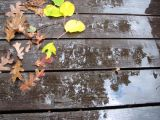 23 Rained on the Deck.jpg