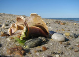 Beach Treasures.JPG