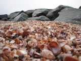 Shells n Rocks.jpg