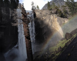 Vernal Falls Tree with Rainbow.jpg