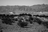 Sand Dunes in Death Valley Black and White.jpg