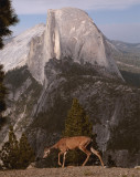 Half Dome from Glacier Point with Deer 2.jpg