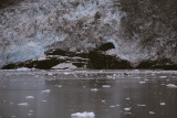 Glacier Closeup.jpg