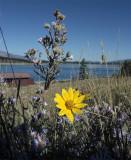 Flowers at Lake Jackson.jpg
