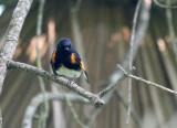 recent_birds