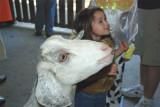 Goat & Brooke