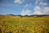 General view on Lavaux vineyards