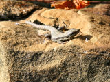 Lizards lounging in the sun