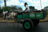 Horse n' wagon