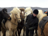 Went horse riding in Hveragerði