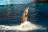 Atlantic Bottlenose Dolphin Show, Indianapolis Zoo, IN