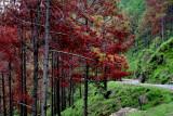 Forest near Sarsawa