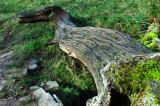 Dinosaur Log.jpg