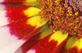 filling-the-frame-pollen.jpg