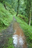 Wet-South-West-coastal-Path.jpg