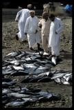 Tunas near Mutrah fishmarket