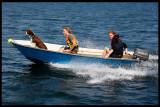Pilot Dog - Stockholm archipelago