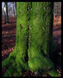 Gren lichen - Bokhultet Växjö 2004
