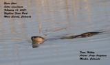 Highline  River Otter