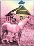 Horse ~ School ~ Marm