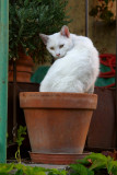 Flower pot Cat