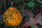 Last gourd 2684