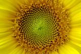 Fibonacci 2751